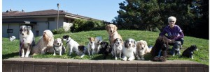 Beverly Ulbrich - San Francisco Dog Trainer and Dog Behaviorist. Private Dog Training.