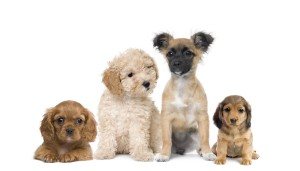 sf dog connect puppy training