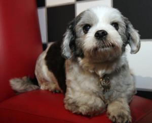 san francisco dog obedience training